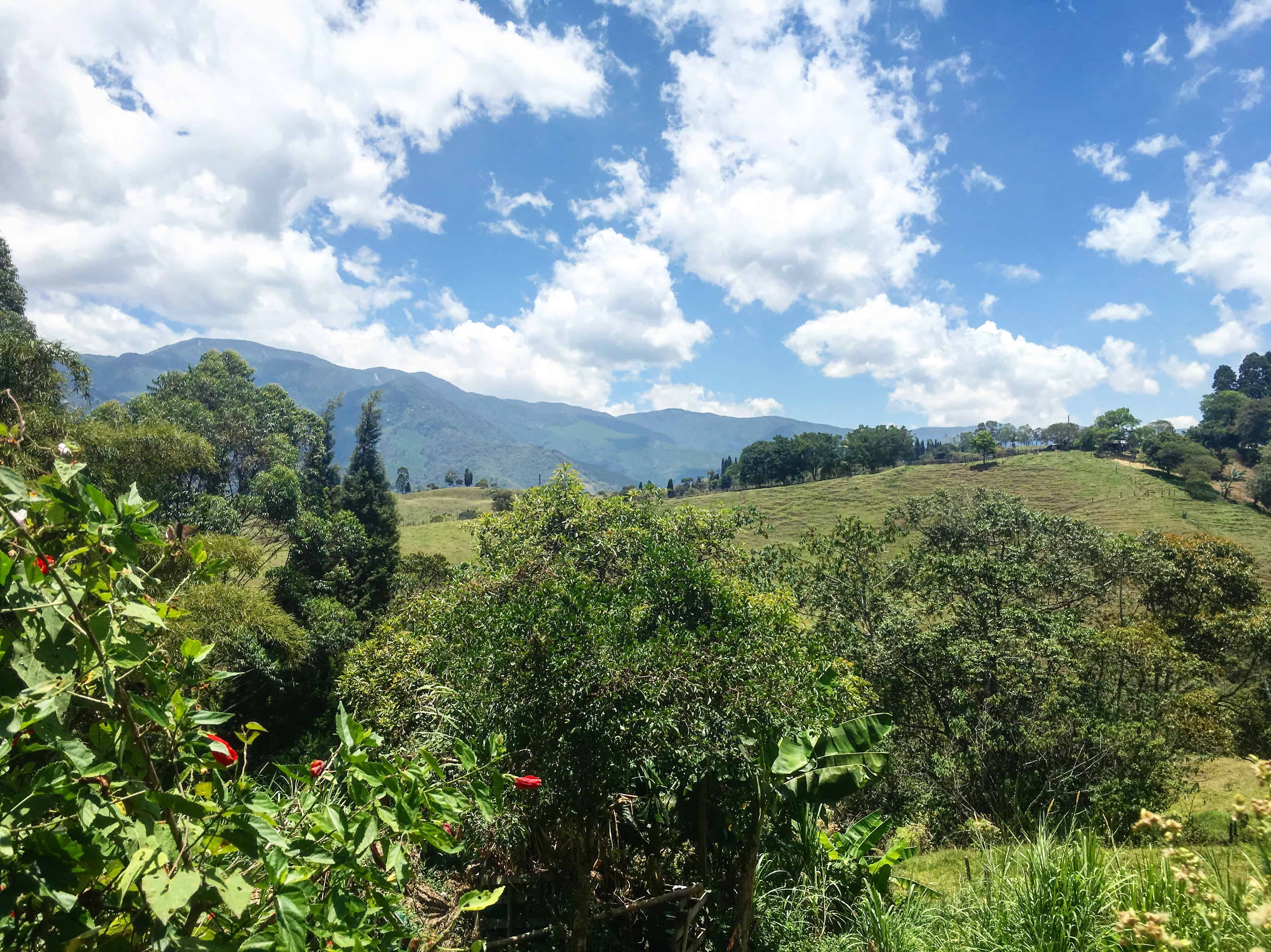 caldas colombia coffee farm